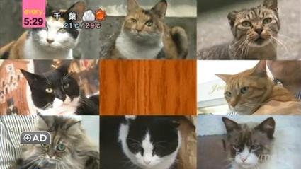 Japan's Cat Elections