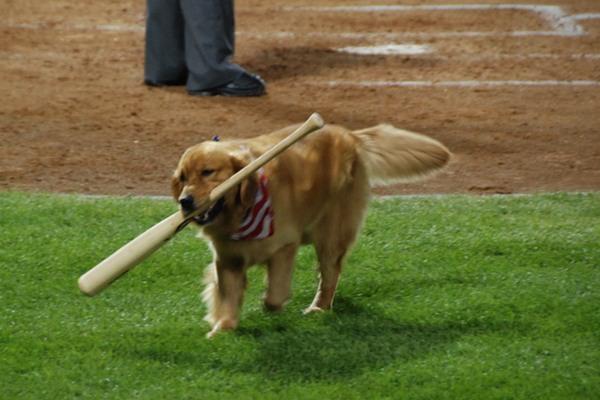 Ollie the Bat Dog