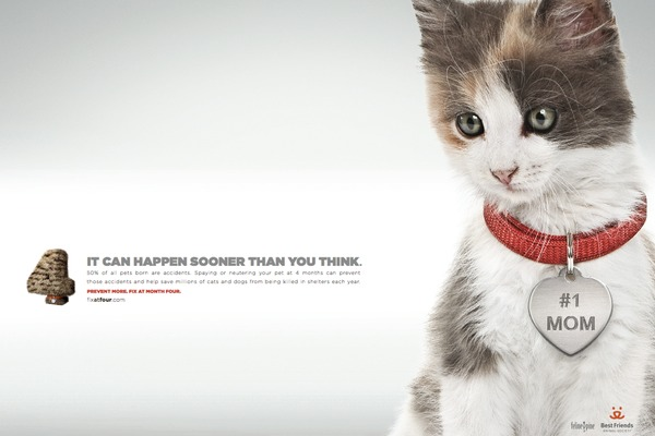 It can happen sooner than you think. 50% of all pets born are accidents. Spaying or neutering your pet at 4 months can prevent those accidents and help save millions of cats and dogs from being killed in shelters each year. Prevent More. Fix at month four.