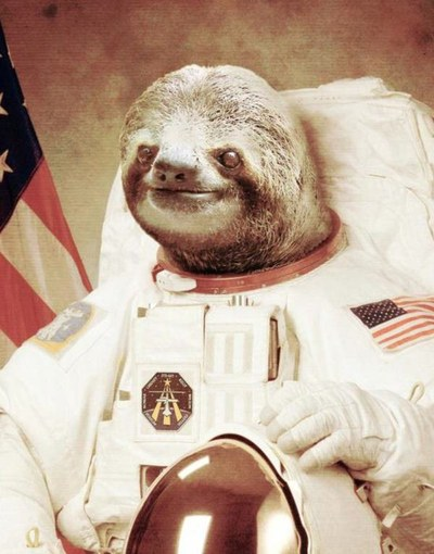 A Space Sloth