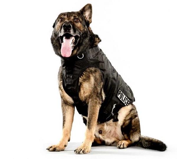 Kosmo the police dog