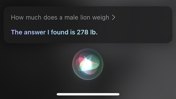 "A siri reply saying ""278 pounds""."