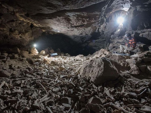 A big old pile of bones in a cave.